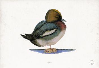 Wigeon - artist signed print